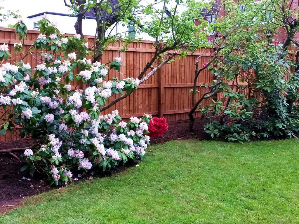 leicester-garden-design0040   Leicester Garden Design